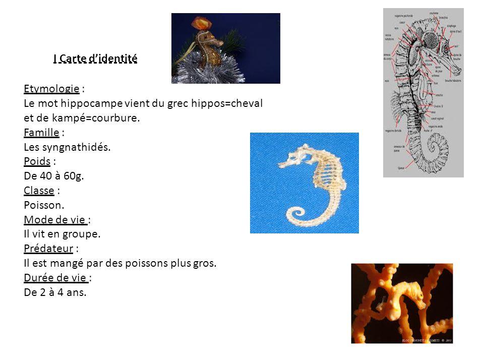 I Carte d'identité Etymologie : Le mot hippocampe vient du grec hippos=cheval. et de kampé=courbure.