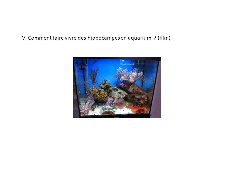 VI Comment faire vivre des hippocampes en aquarium (film)