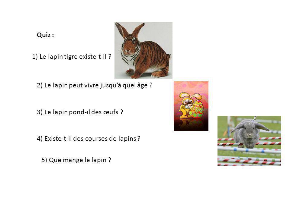 Expos de mathilde ce2 le lapin ppt t l charger - Sieste du matin jusqu a quel age ...