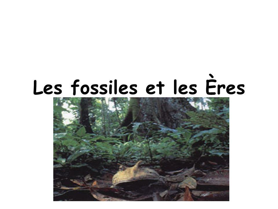 Les fossiles et les Ères