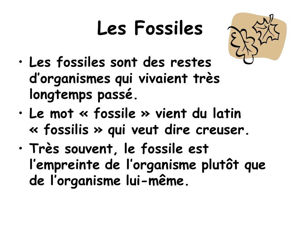 Les Fossiles Les fossiles sont des restes d'organismes qui vivaient très longtemps passé.
