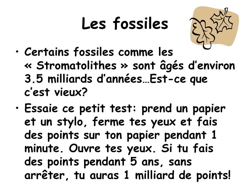 Les fossiles Certains fossiles comme les « Stromatolithes » sont âgés d'environ 3.5 milliards d'années…Est-ce que c'est vieux