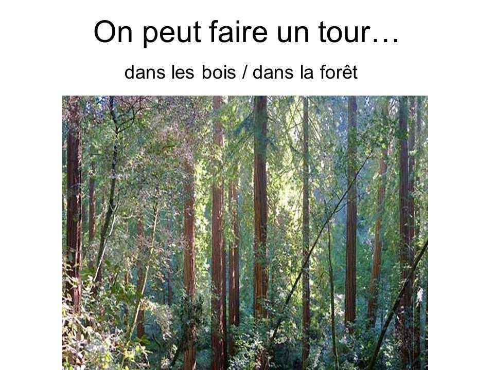 On peut faire un tour… dans les bois / dans la forêt