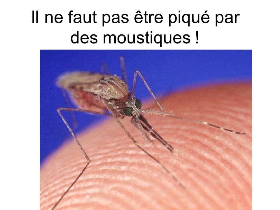 Il ne faut pas être piqué par des moustiques !
