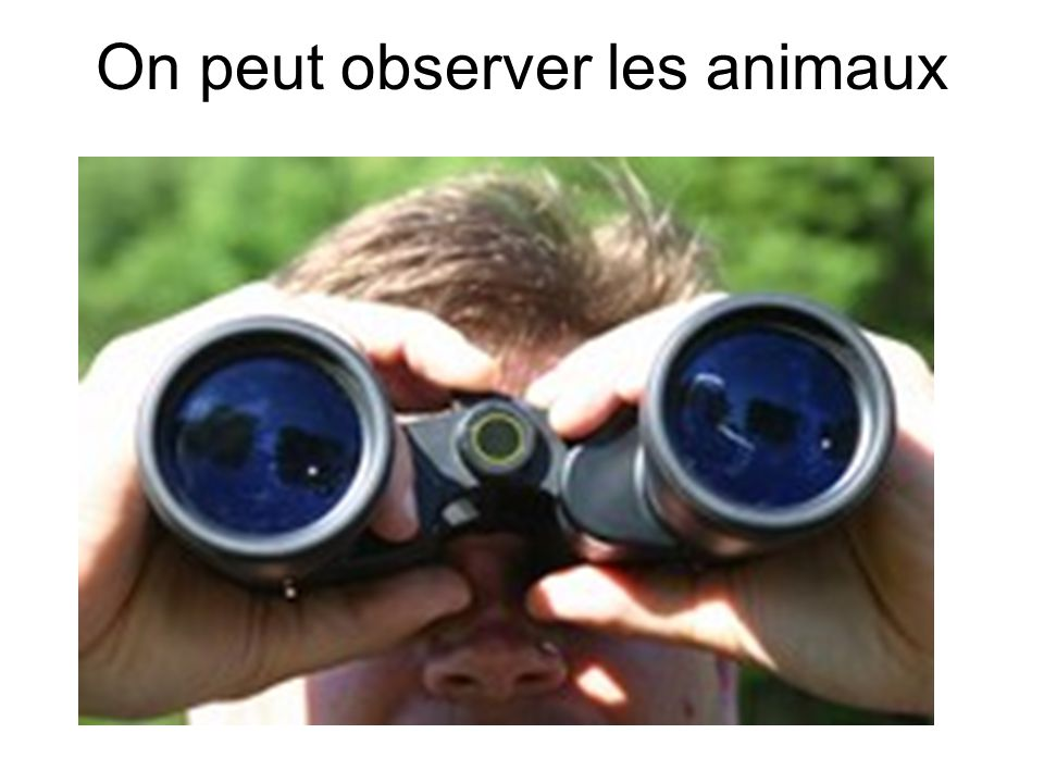 On peut observer les animaux