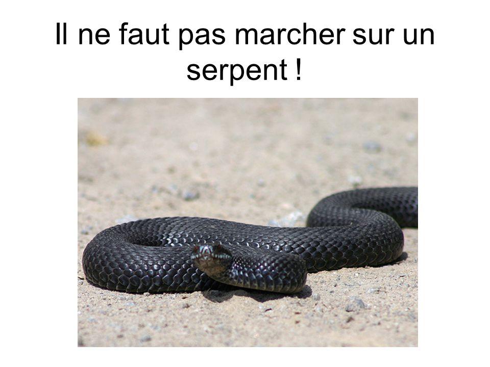 Il ne faut pas marcher sur un serpent !