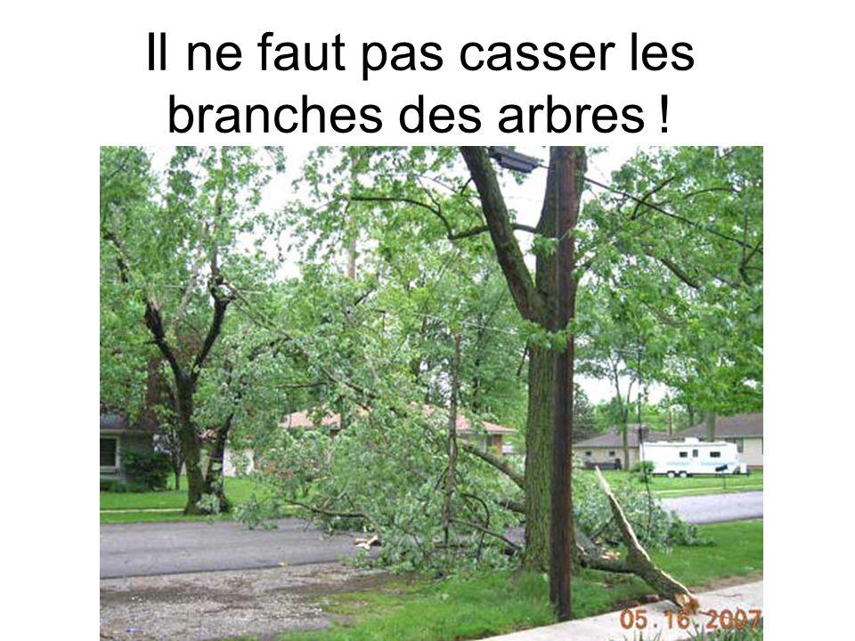 Il ne faut pas casser les branches des arbres !