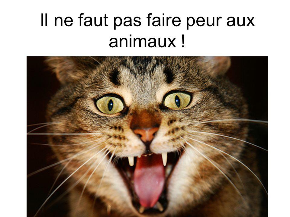 Il ne faut pas faire peur aux animaux !