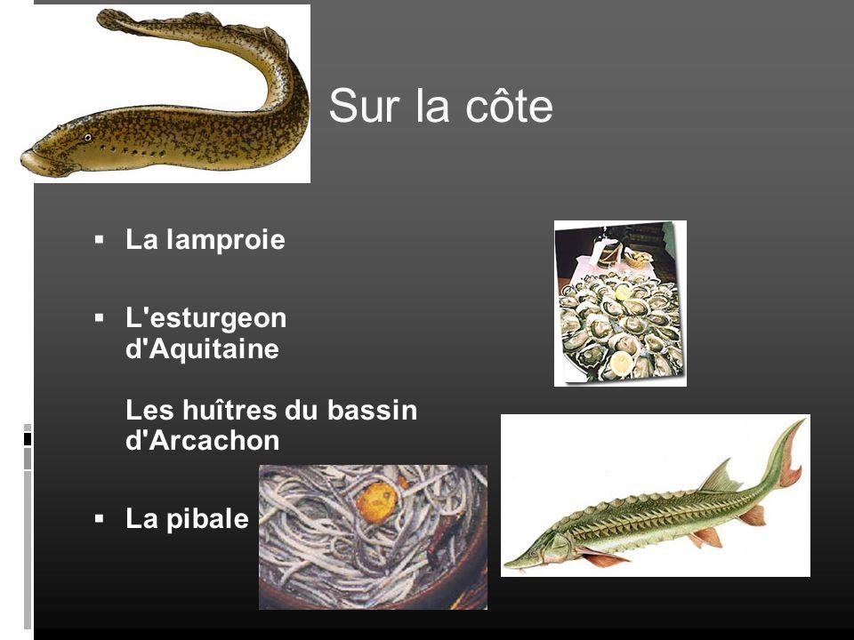 Sur la côte La lamproie L esturgeon d Aquitaine Les huîtres du bassin d Arcachon La pibale