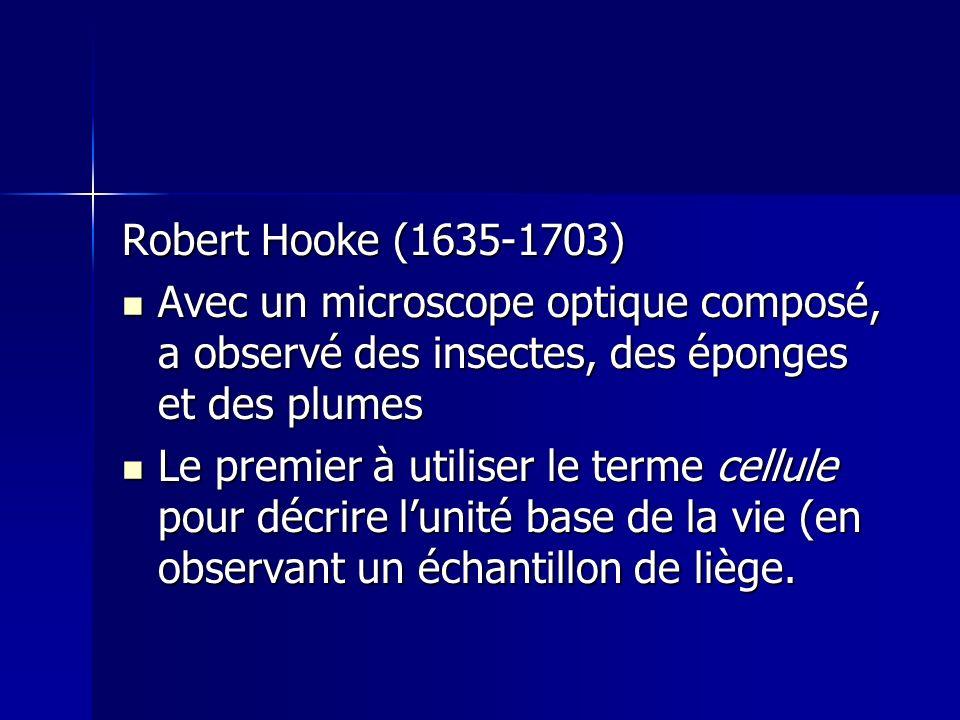 Robert Hooke (1635-1703) Avec un microscope optique composé, a observé des insectes, des éponges et des plumes.