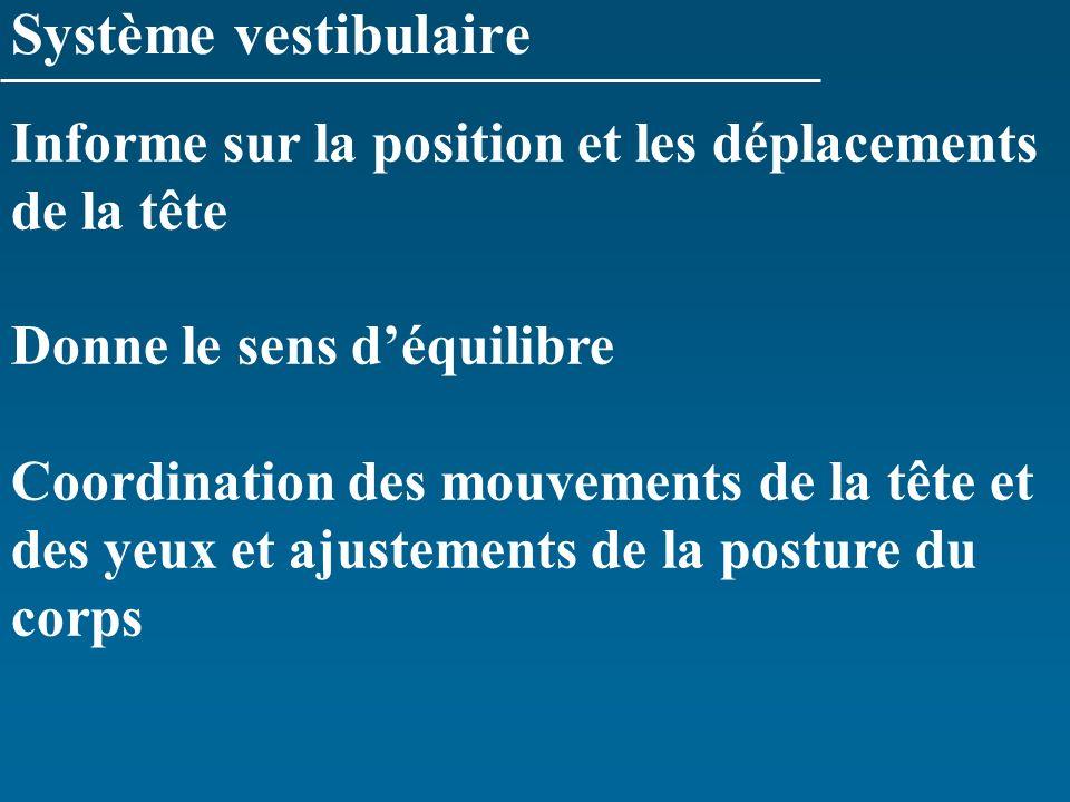Système vestibulaire Informe sur la position et les déplacements de la tête. Donne le sens d'équilibre.