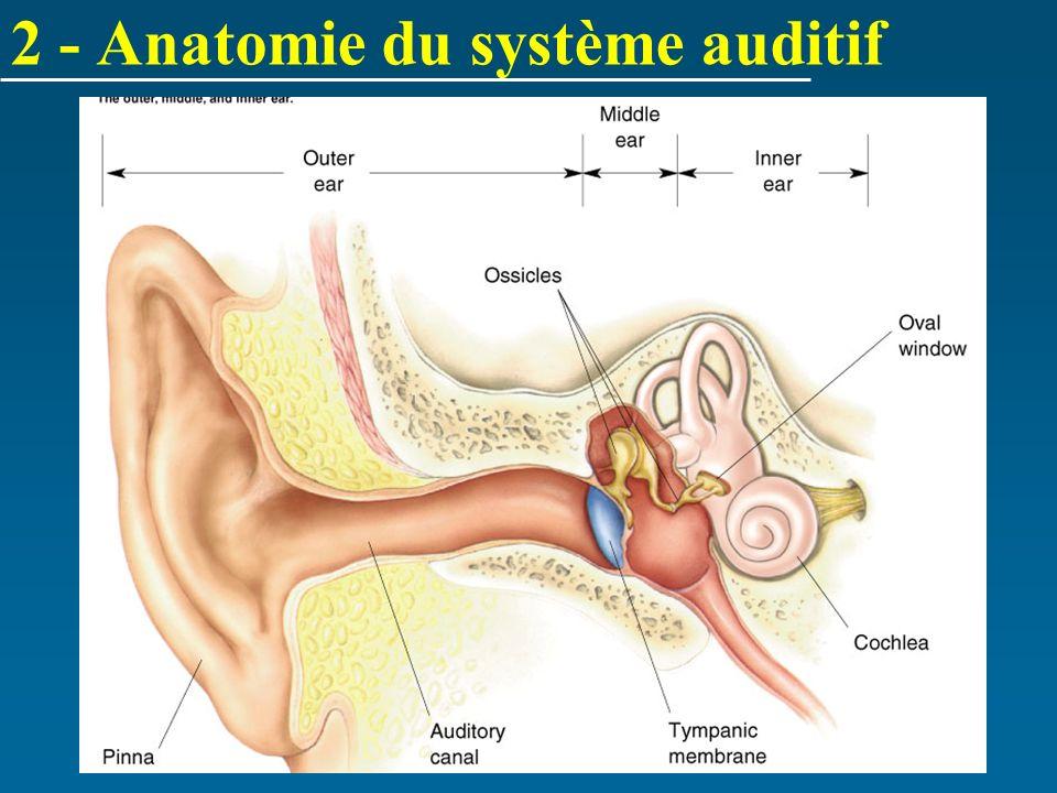 2 - Anatomie du système auditif
