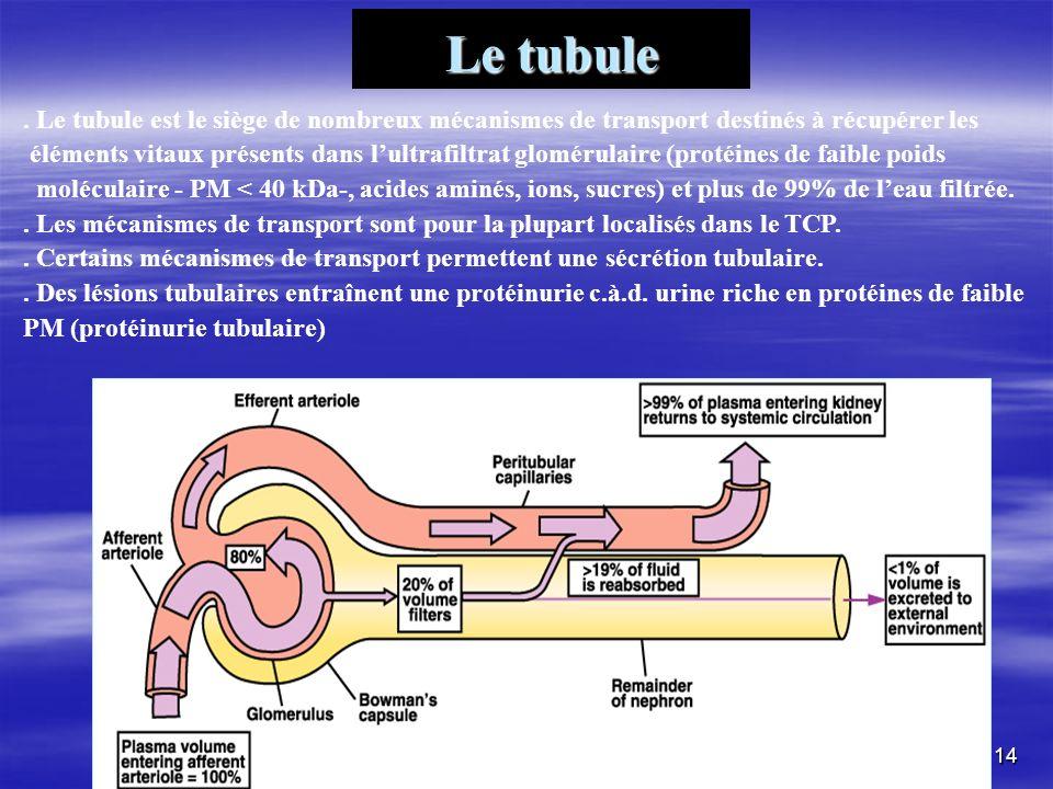 Le tubule . Le tubule est le siège de nombreux mécanismes de transport destinés à récupérer les.