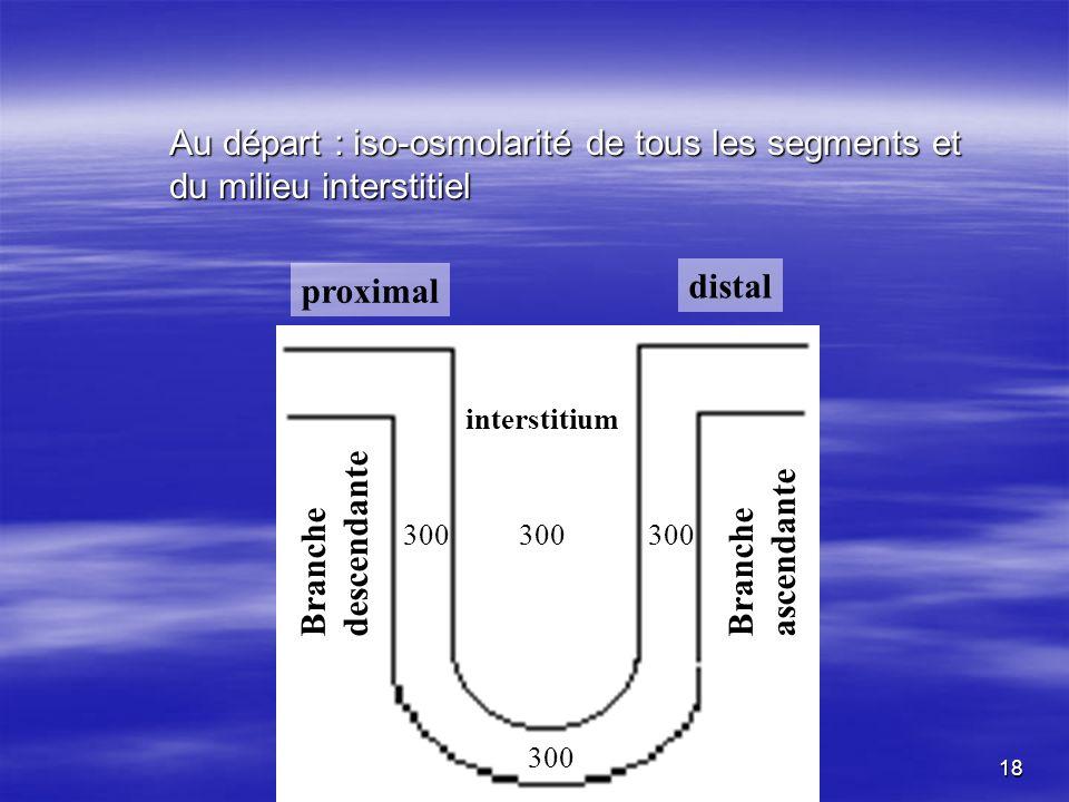 Au départ : iso-osmolarité de tous les segments et du milieu interstitiel