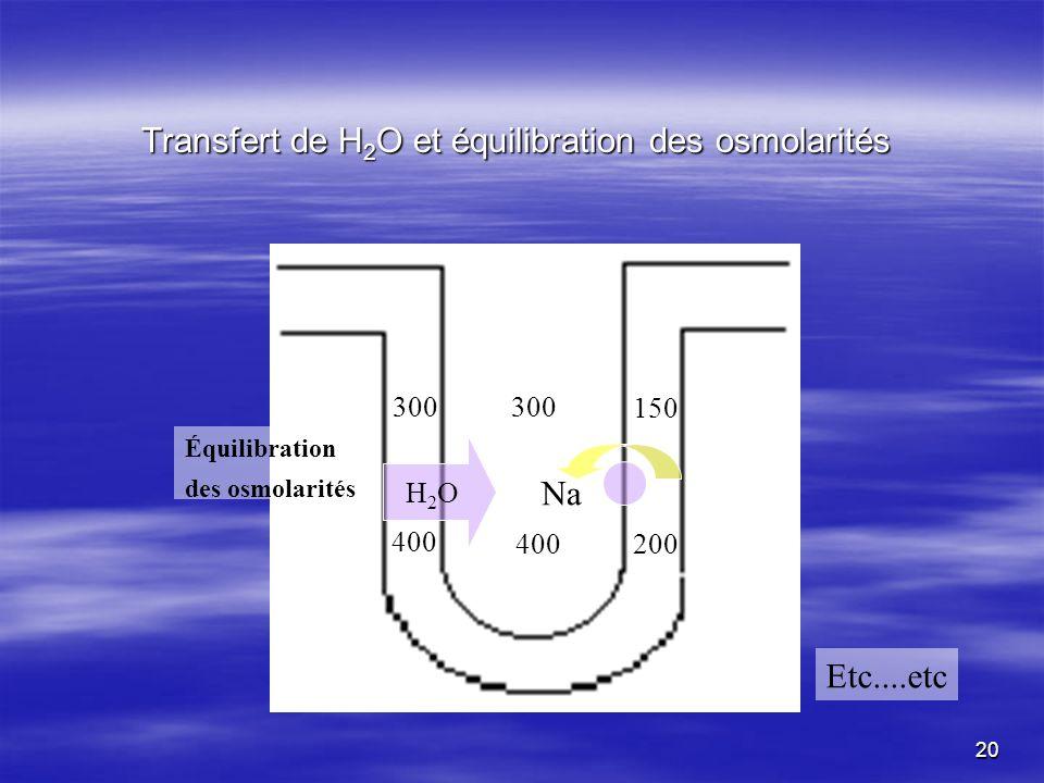 Transfert de H2O et équilibration des osmolarités