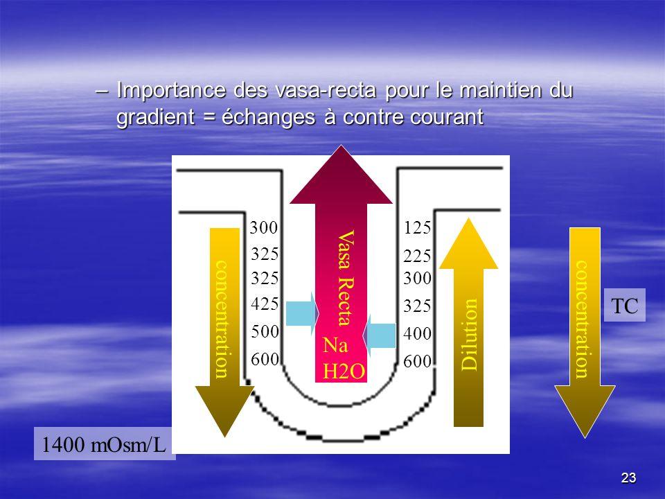 Importance des vasa-recta pour le maintien du gradient = échanges à contre courant