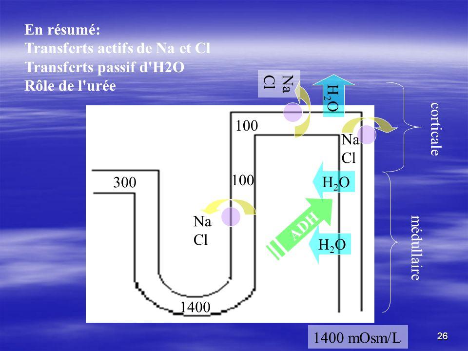 En résumé: Transferts actifs de Na et Cl. Transferts passif d H2O. Rôle de l urée. H2O. Na. Cl.