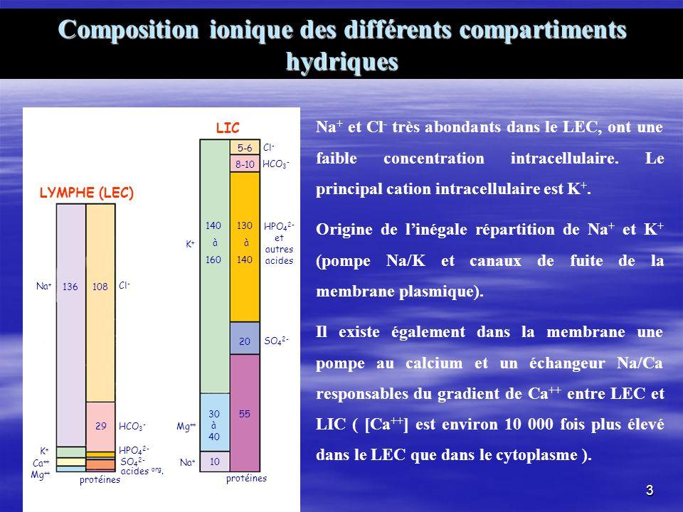 Composition ionique des différents compartiments hydriques