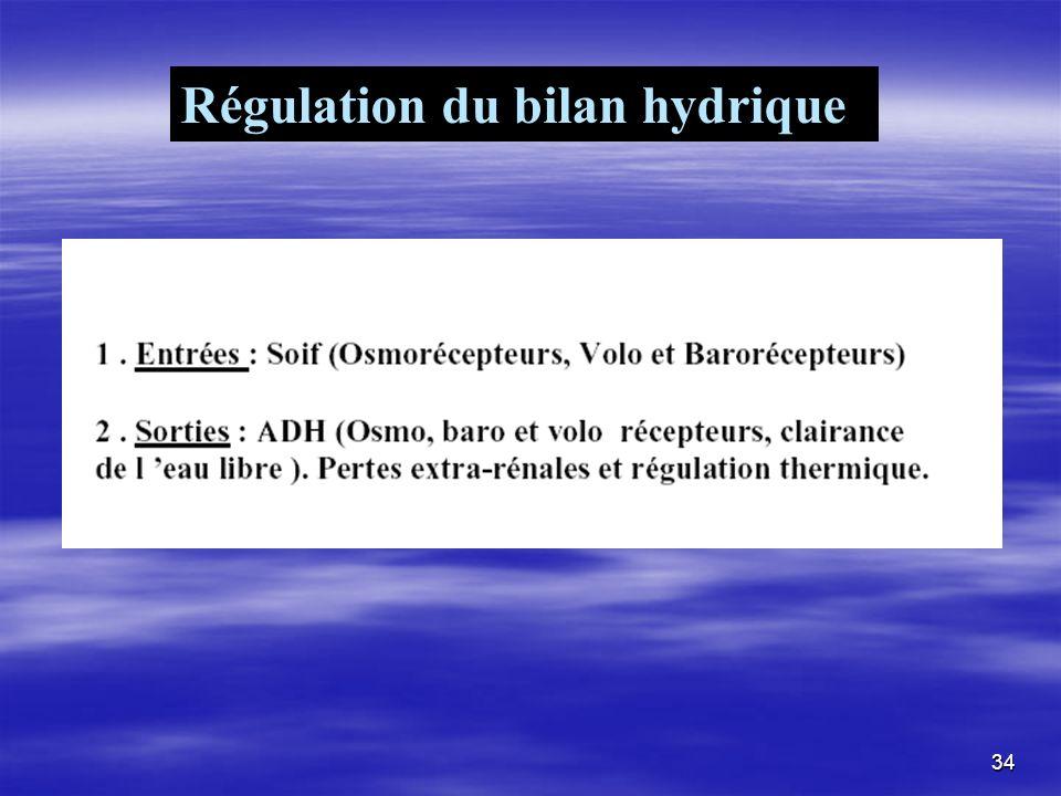 Régulation du bilan hydrique