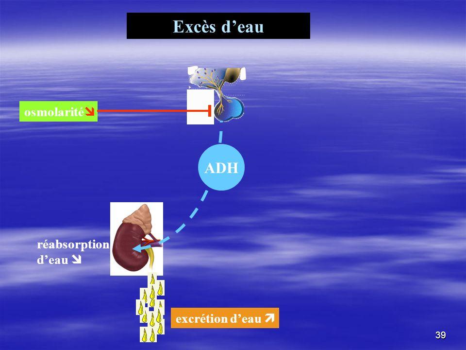 Excès d'eau osmolarité ADH réabsorption d'eau  excrétion d'eau 