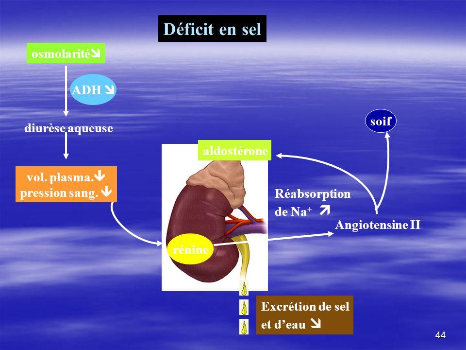 Déficit en sel osmolarité ADH  soif diurèse aqueuse aldostérone