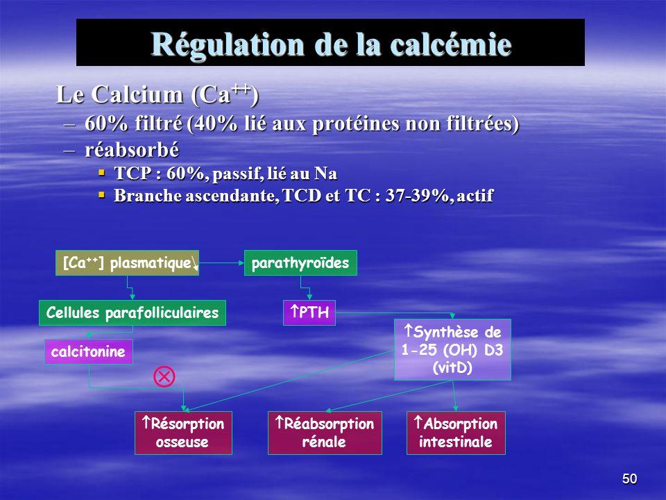 Régulation de la calcémie Cellules parafolliculaires