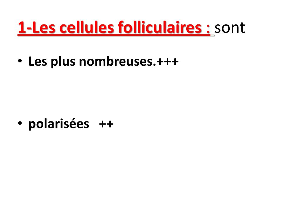 1-Les cellules folliculaires : sont