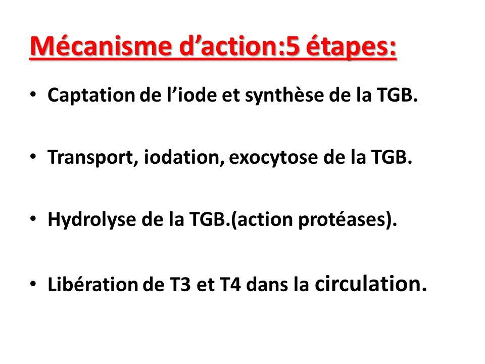 Mécanisme d'action:5 étapes: