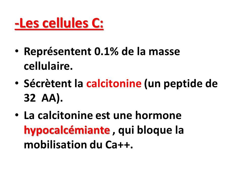 -Les cellules C: Représentent 0.1% de la masse cellulaire.
