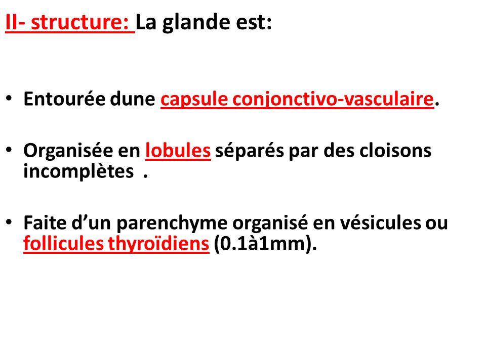 II- structure: La glande est: