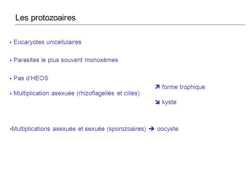 Les protozoaires Eucaryotes unicellulaires