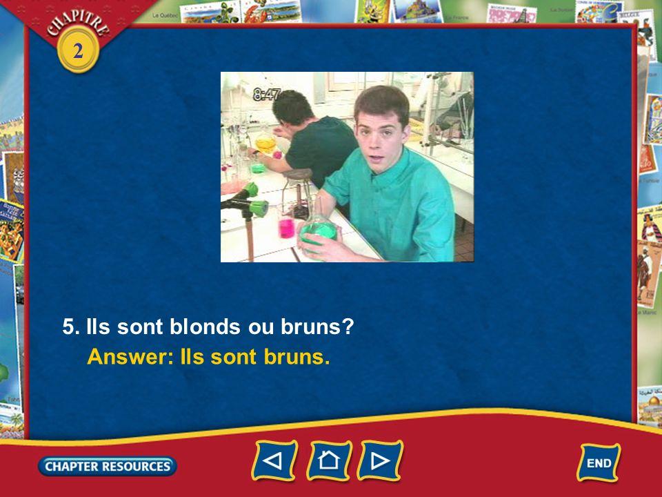 5. Ils sont blonds ou bruns