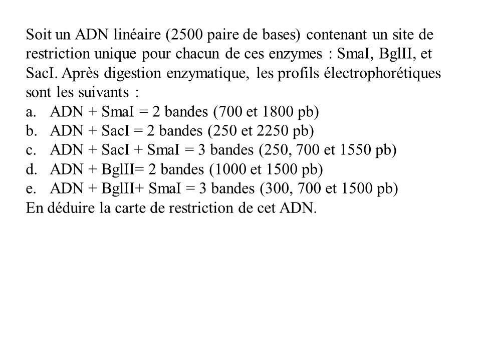 Soit un ADN linéaire (2500 paire de bases) contenant un site de restriction unique pour chacun de ces enzymes : SmaI, BglII, et SacI. Après digestion enzymatique, les profils électrophorétiques sont les suivants :