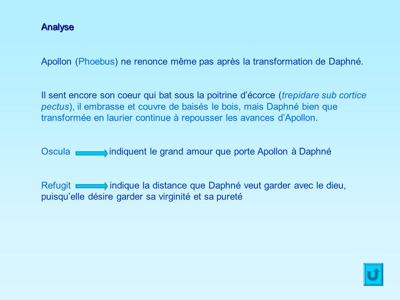 AnalyseApollon (Phoebus) ne renonce même pas après la transformation de Daphné.
