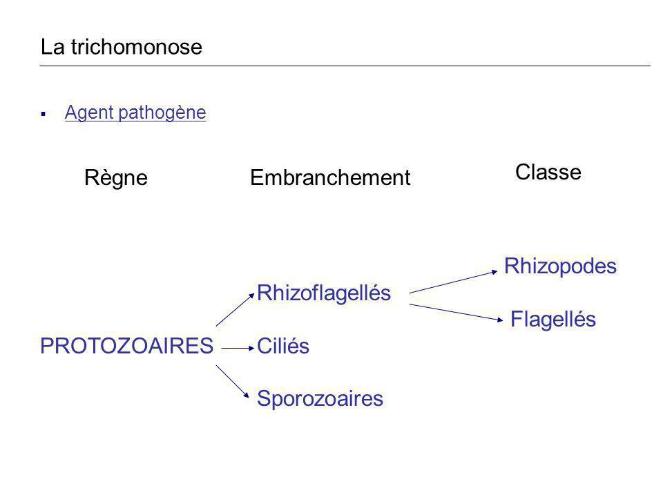 La trichomonose Classe Règne Embranchement Rhizoflagellés Flagellés