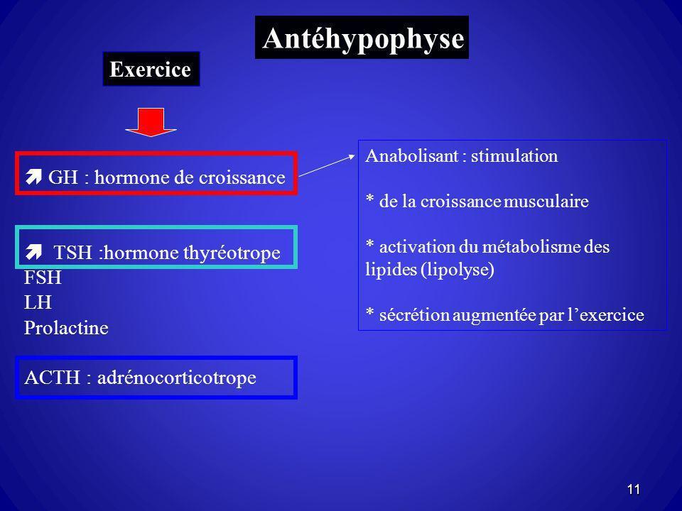 Antéhypophyse Exercice  GH : hormone de croissance
