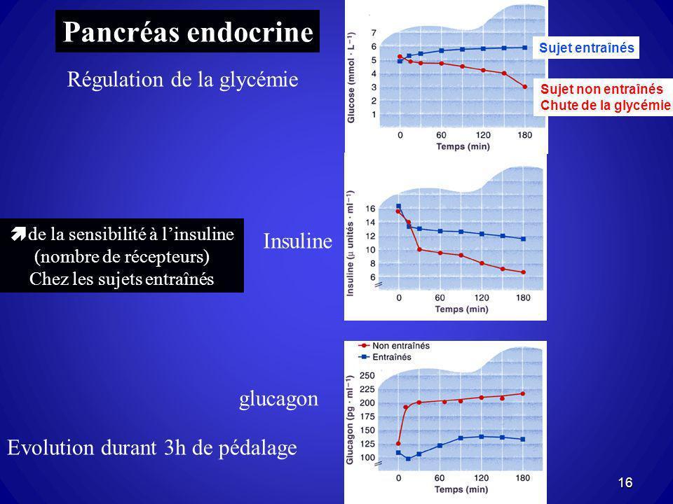 Pancréas endocrine Régulation de la glycémie Insuline glucagon