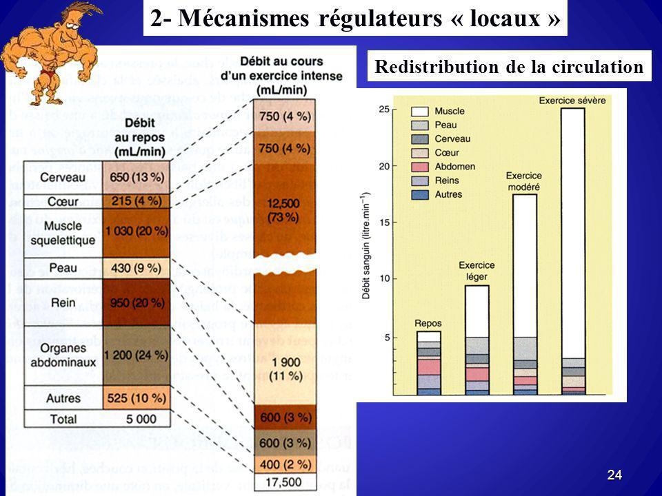 2- Mécanismes régulateurs « locaux »