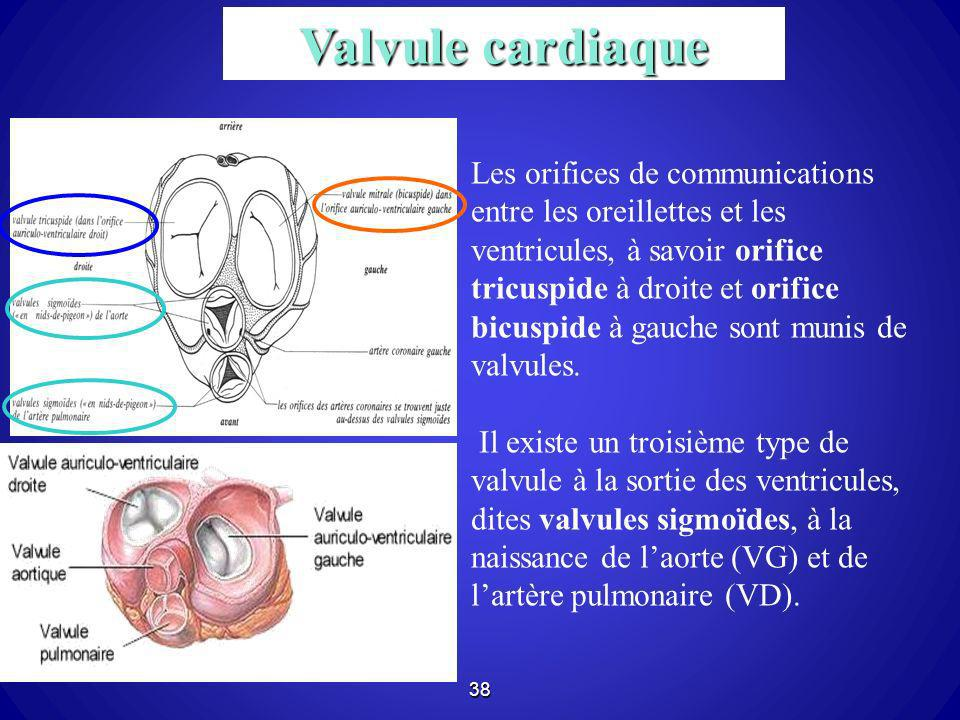 Valvule cardiaque
