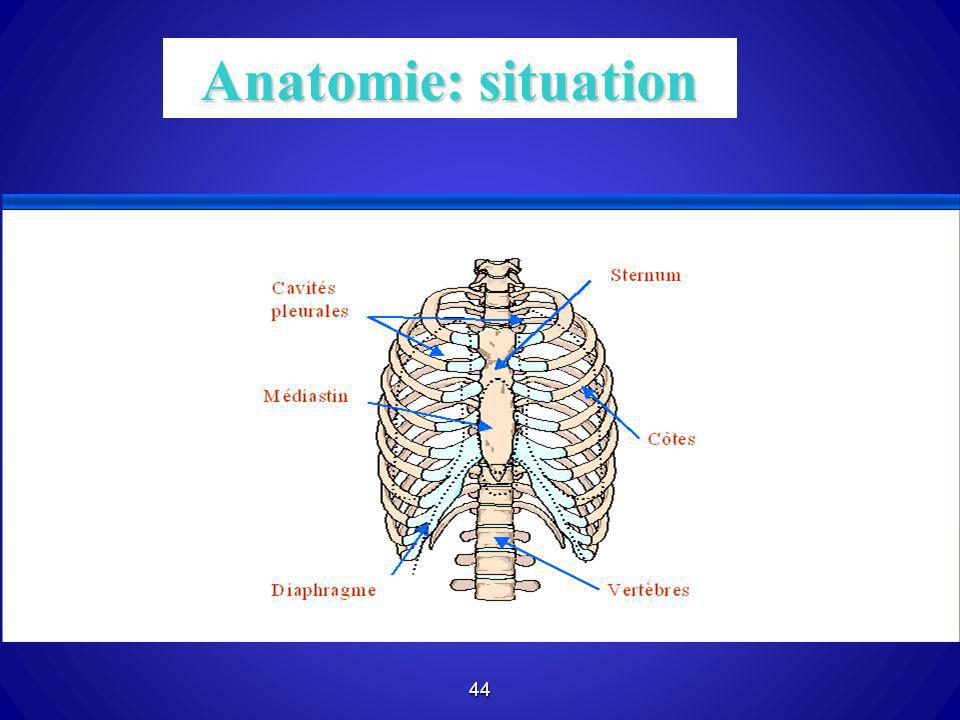 Anatomie: situation