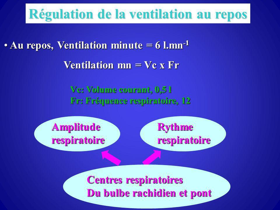 Régulation de la ventilation au repos