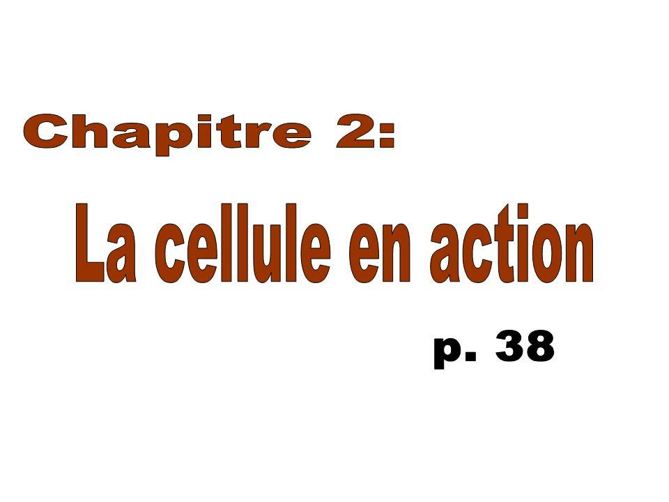 Chapitre 2: La cellule en action p. 38
