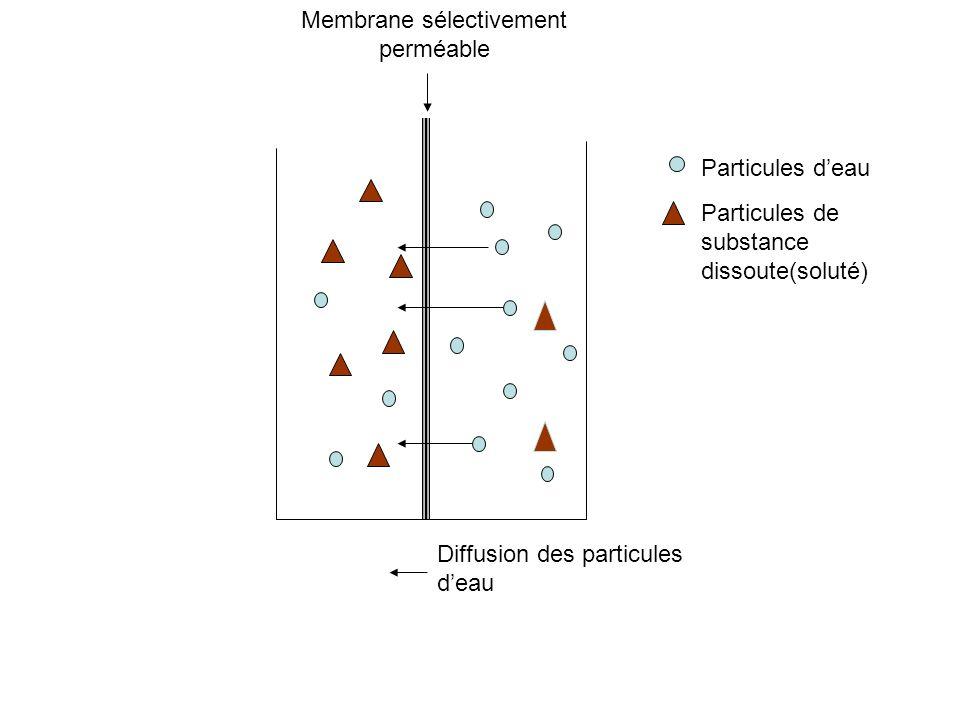 Membrane sélectivement perméable