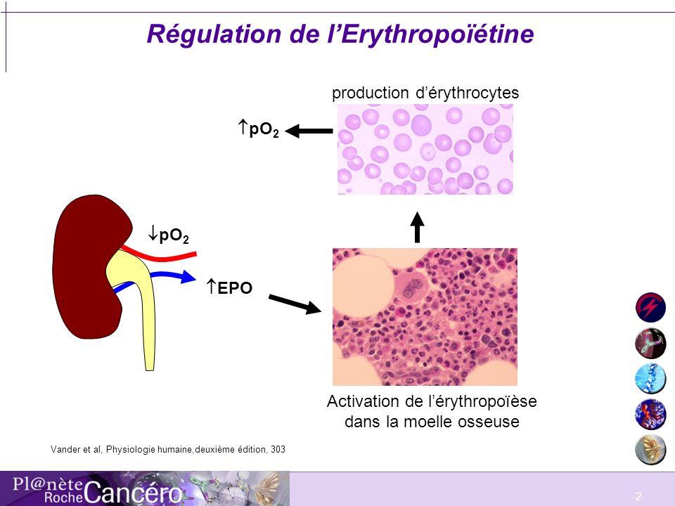 Régulation de l'Erythropoïétine
