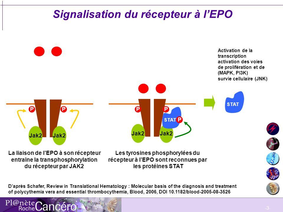Signalisation du récepteur à l'EPO