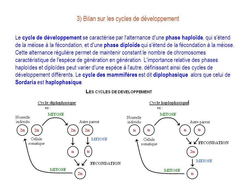 3) Bilan sur les cycles de développement