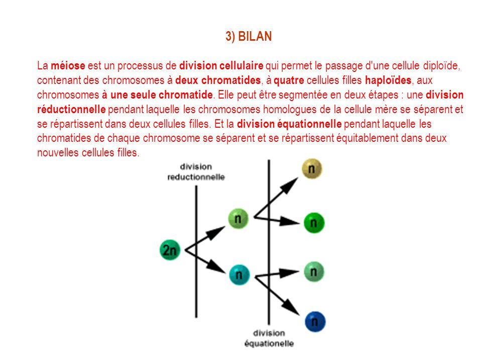 3) BILAN