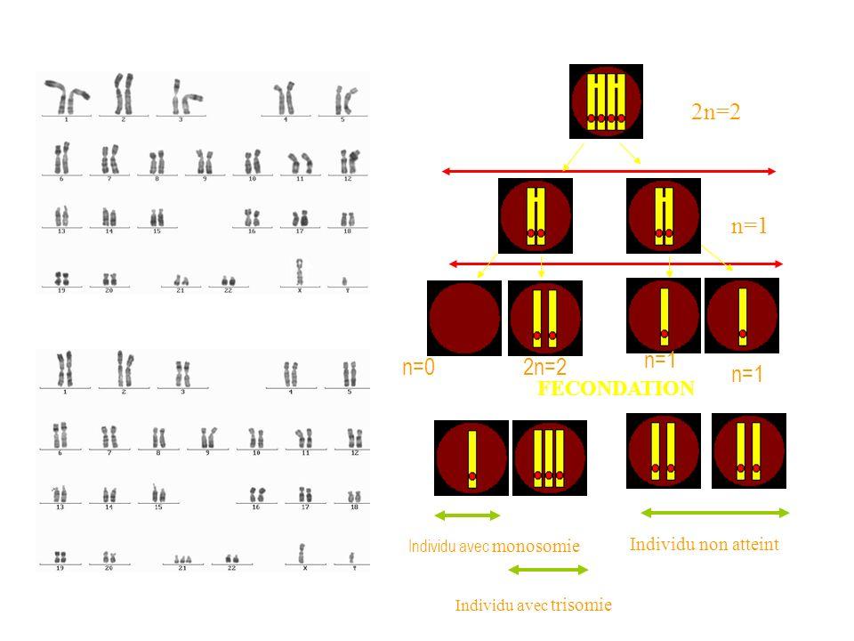 2n=2 n=1 n=1 n=0 2n=2 n=1 FECONDATION Individu non atteint