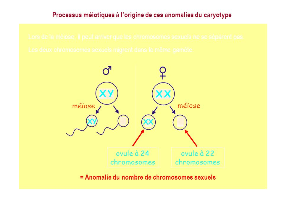 X Y X X Processus méiotiques à l'origine de ces anomalies du caryotype