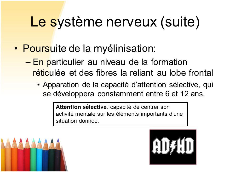 Le système nerveux (suite)